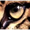 AmurLeopard's avatar
