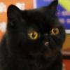 An0nymoose's avatar