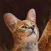 anastasiawyatt's avatar