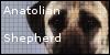 AnatolianShepherd's avatar