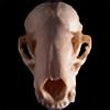 Anatomical-Automaton's avatar