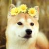 AncientKiwi's avatar
