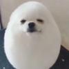 Angelcake1012's avatar