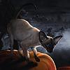Angeli-Daemon's avatar