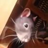 AngryDuckTimeMachine's avatar