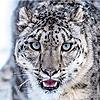 AngrySnowLeopard's avatar