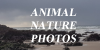 Animal-Nature-Photos's avatar