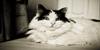 Animal-Photographer's avatar