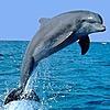 Animallover4813's avatar