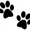 animalpaw30's avatar