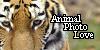 AnimalPhotoLove