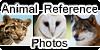 AnimalReferencePhoto's avatar