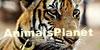 AnimalsPlanet