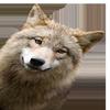 animation454's avatar