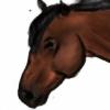 AnnaHorseLoverAnna's avatar