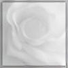 anonEmus's avatar