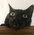 AnonymousButObvious's avatar