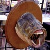 Anothercrappyuser's avatar