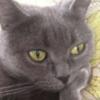 Anrisssss's avatar