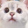 Anshalyn's avatar