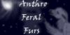 Anthro-Feral-Furs