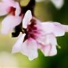 antonina-w-ogrodzie's avatar