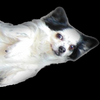 applesedphotography's avatar