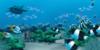 Aquarium-RPG