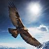 Aquila200's avatar