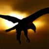 Aquila43's avatar