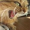 Archesa's avatar