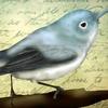 Arery's avatar