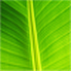 Arescobar's avatar