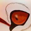 Arewco's avatar