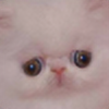 Argule's avatar