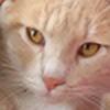 armageddongal's avatar