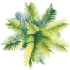 Arqcalo's avatar