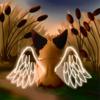 ARScienceMuffin's avatar