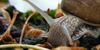 arta-din-fotografie's avatar