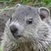 artistpaw's avatar