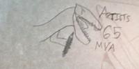 Artists65MYA's avatar