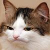 ArtMaker4455's avatar