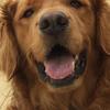 artnsm's avatar