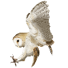 ArtofNym's avatar