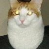 artstudenttiago's avatar