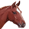 Arucane's avatar