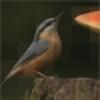 Aryfrancois's avatar
