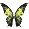 asad-aria's avatar