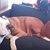 Ashburr's avatar