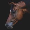 ashcorsair's avatar